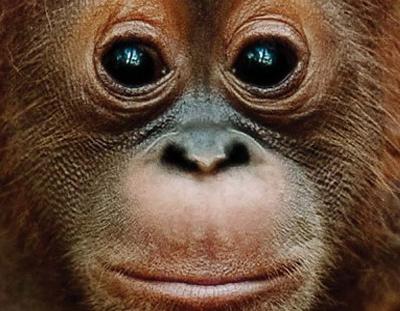 Palm Oil Free!